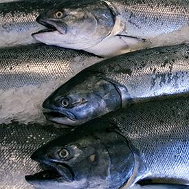 salmonFood