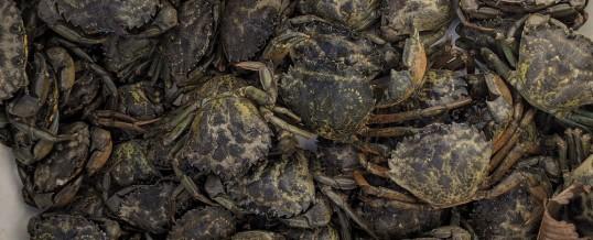 2020 Coastal Green Crab Update