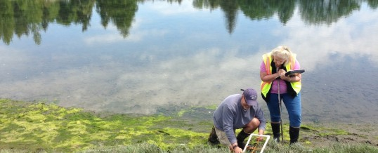 WSG Crab Team Receives 2020 Salish Sea Science Prize