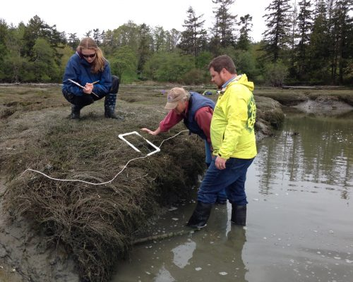 At Westcott Bay, new volunteers have taken the mantle for ongoing monitoring of the site of the first green crab capture in Washington's inland waters (Photo: Emily Grason)
