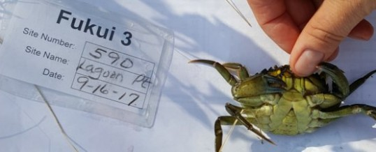 European Green Crab Captured on Whidbey Island