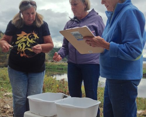 Linda, Tracy, and Lois measure and sort HEOR at Musquetti Point in August 2018 (Photo: E. Grason)