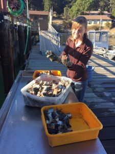 Emily preps bait for trapping response on the FHL docks.