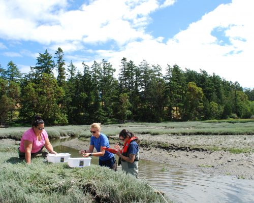 L to R: Patty Menning from DFO Canada, Kelly Martin, and Chelsey Buffington from WDFW at Westcott Bay.