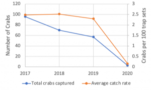 A graph showing number of green crabs captured declining annually since 2017. The graph also shows a line tracking average capture rate over the same period, which does not show substantial decline until the most recent year.