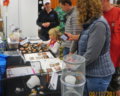 NextGen Crabbers? Emily shares the latest on European green crab with the crowd at Fidalgo Bay Day in August. Photo: Pete Haase