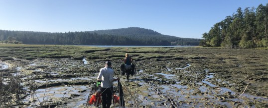 European Green Crab Detection During San Juan Island Assessment