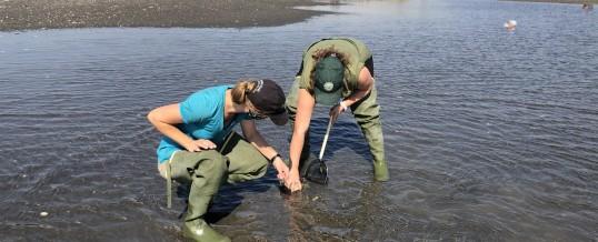 2020 Salish Sea Green Crab Update