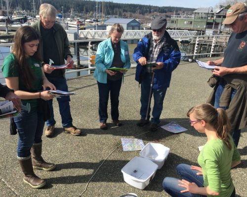 Emily and some new volunteers practice the monitoring protocol at our volunteer training in Poulsbo.