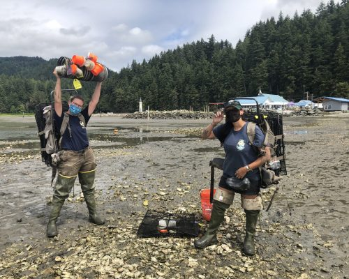 WDFW staff conduct an assessment trapping at Samish Bay. Photo credit: Emily Grason