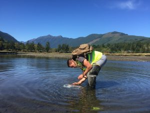 UW Capstone student Bryton Siefert in 2015 working to assess the efficacy of bait types (Photo: Sean McDonald)