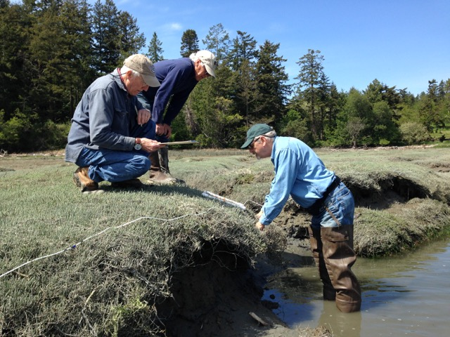Washington Sea Grant Crab Team volunteers (L-R) Jack Bell, Bruce Robinson, and Craig Staude assess shoreline vegetation on San Juan Island, Westcott Bay marsh, as part of monthly monitoring. Photo by WSG Crab Team Program Coordinator, Emily Grason, 2016. Photo courtesy of Washington Sea Grant.