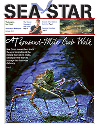 Autumn 2013 Sea Star